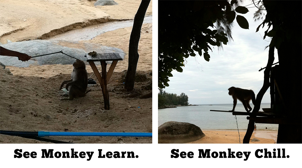 Monkey-at-the-Beach-in-Phuket